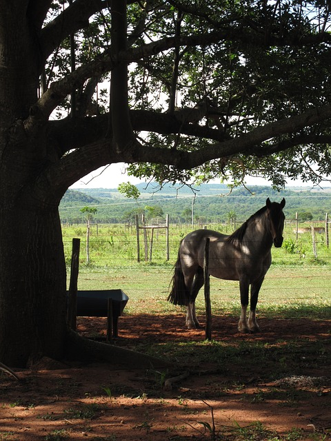 Free horse backlight farm countryside country