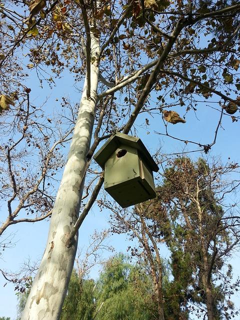 Free bird nest birdhouse tree