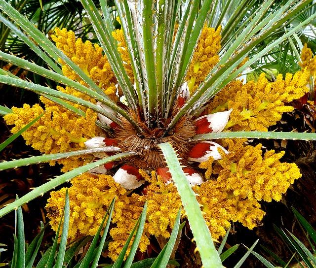 Free flower palm palm trees beach