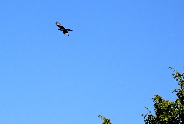 Free elster flight tree sky blue