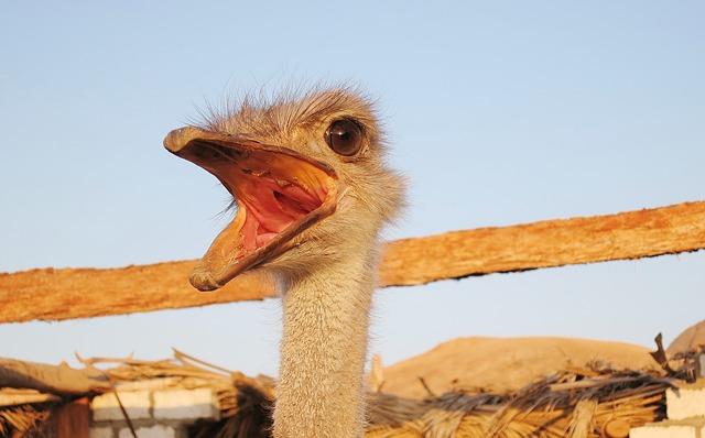 Free emu flightless bird face bill eye neck