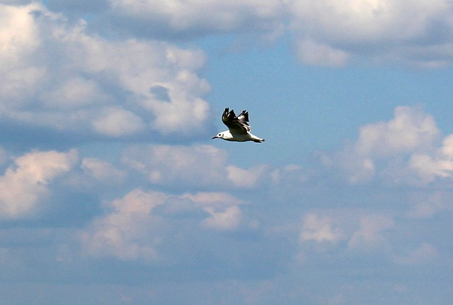 Free gull flight sky clouds clouds form mood