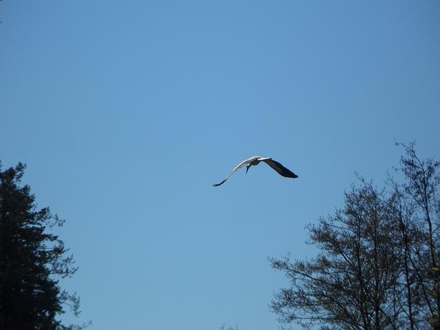 Free stork fly bird sky migratory bird spring return