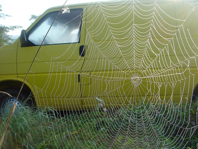 Free car yellow a spider's web large impression