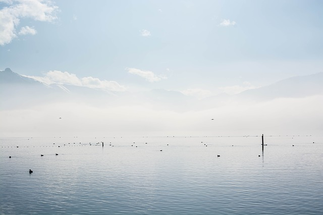 Free see clouds fog water wave rest ducks pets birds