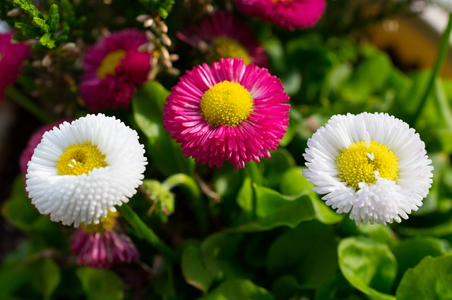 Free flowers yellow red pink white nature green