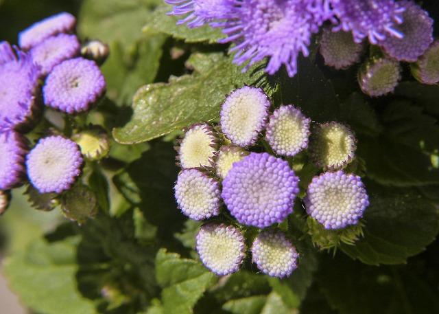 Free purple flower plant beauty purple cluster tiny