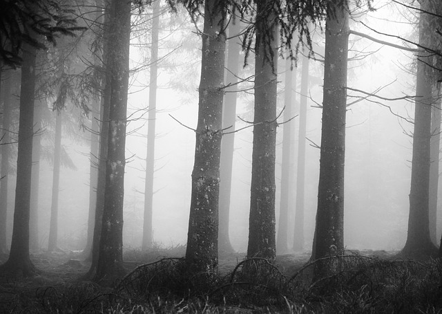Free fog forest tree trunks mystical landscape trees