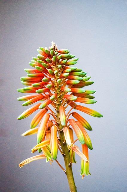 Free flowers green succulent plant flora beauty