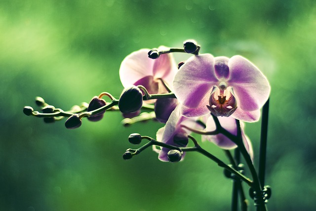 Free orchid flower colored green plant flowers beauty