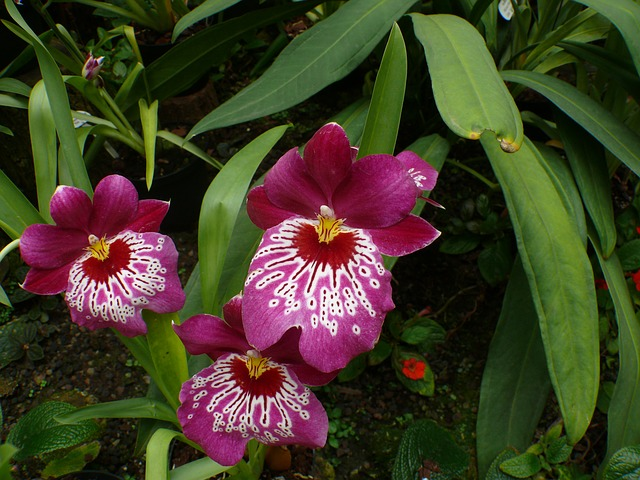 Free orchid greenhouse flower plant