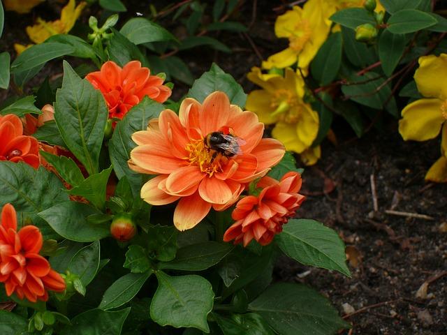 Free flowers as lien orange plant