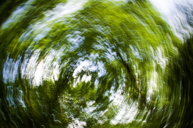 Free background strudel abstract photo art trees