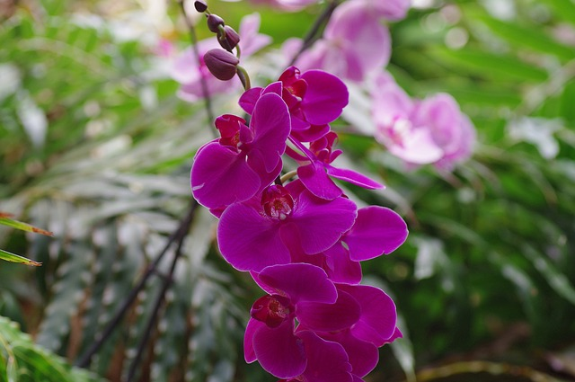 Free orchid wild orchid flower purple plant close
