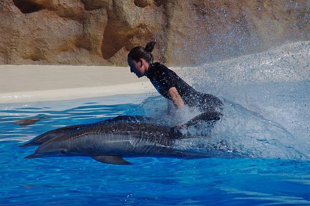 Free dolphin marine mammals water dolphins swim fast