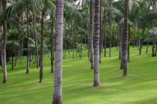 Free palm trees tropscher forest tropics mood light