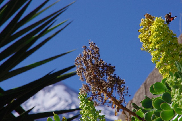 Free plant mountain sky flower perspective sunny