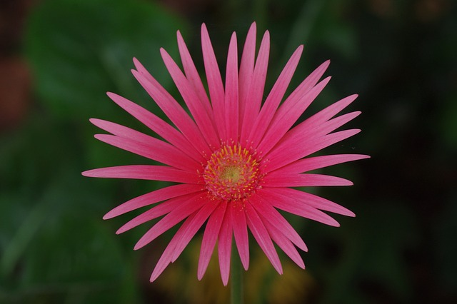 Free flower red pink plant macro nature bloom close