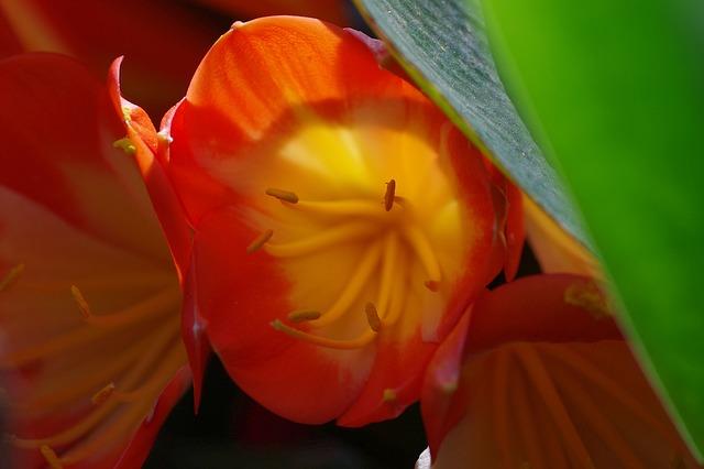 Free flower red plant macro nature bloom close pistil