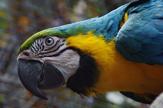 Free parrot bird plumage colorful color ara head bill