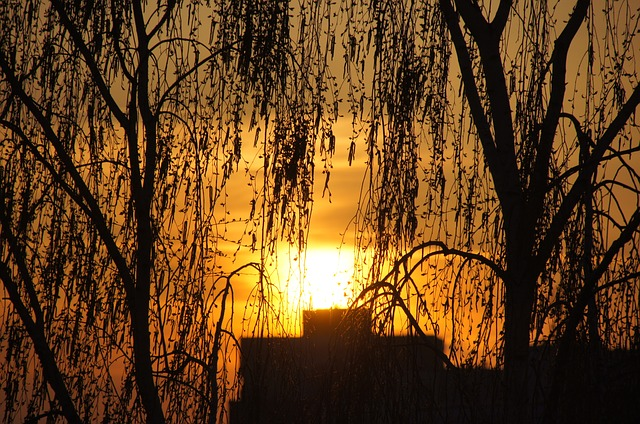 Free evening sunset sky tree the sun birch weather
