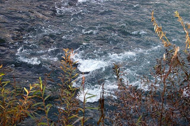 Free river flow spray water nature rapids shrubs