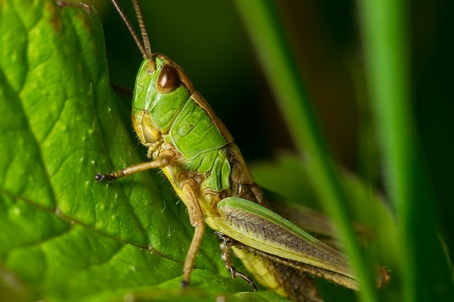 Free               grasshopper nature macro detail in the grass horse
