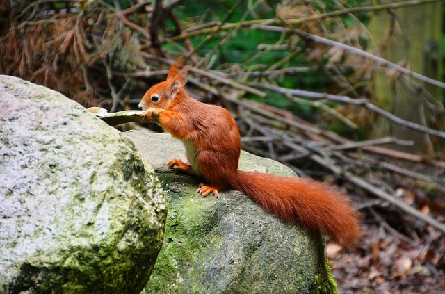 Free squirrel forest eco-park güstrow