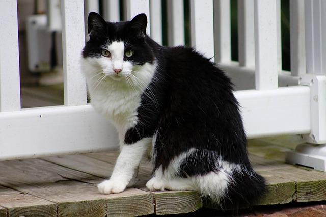 Free cat outside pet feline large