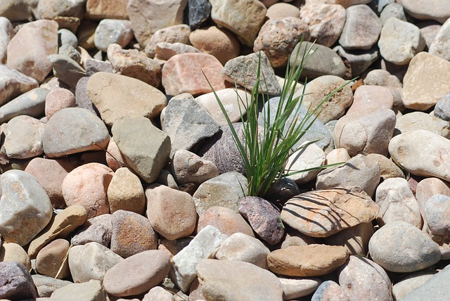 Free pebbles rocks weed stones