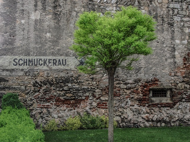 Free green grass meadow bush nature wall facade stone