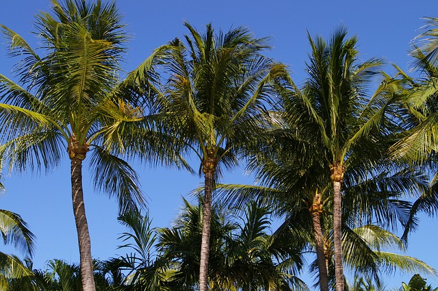 Free sky palm trees nature