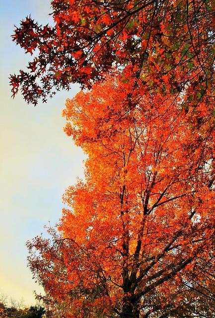Free autumn tree tree orange golden light autumn