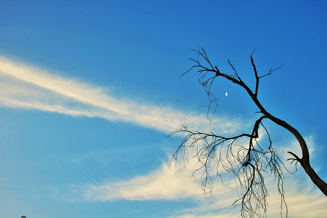 Free dry branch tree dry dead branches twigs stylish