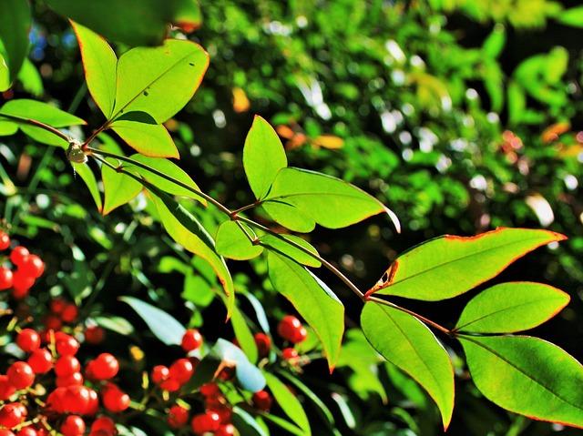 Free translucent leaves leaves green light backlight