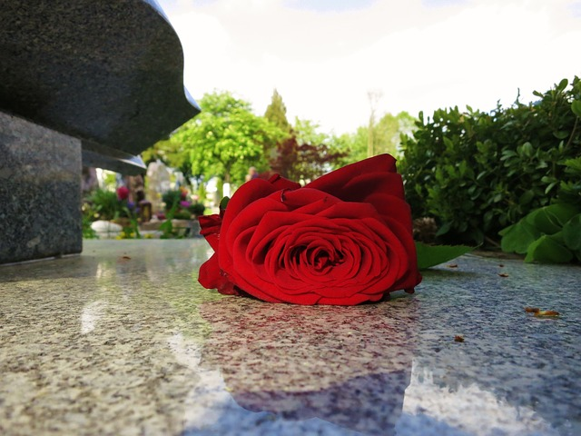 Free beauty red rose rose bloom tombstone farewell
