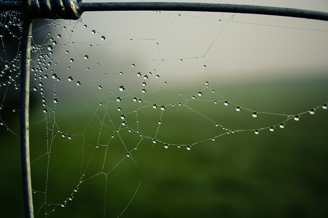 Free autumn fog fence cobweb network dew