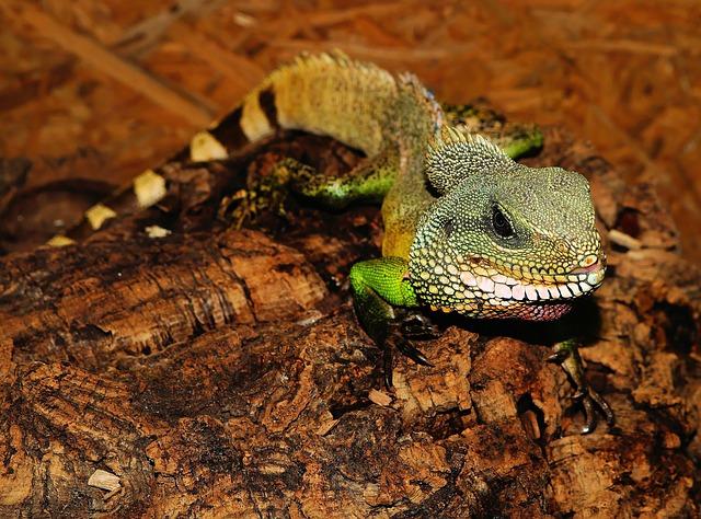 Free lizard reptile scale terrarium urtier dry hot