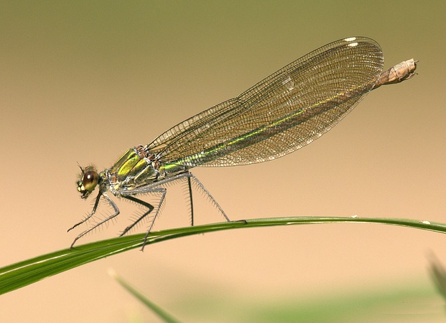 Free               dragonfly shiny insect eyes animal wing summer