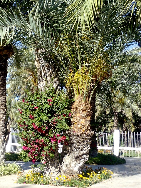 Free elche park ride tourism palms plants nature