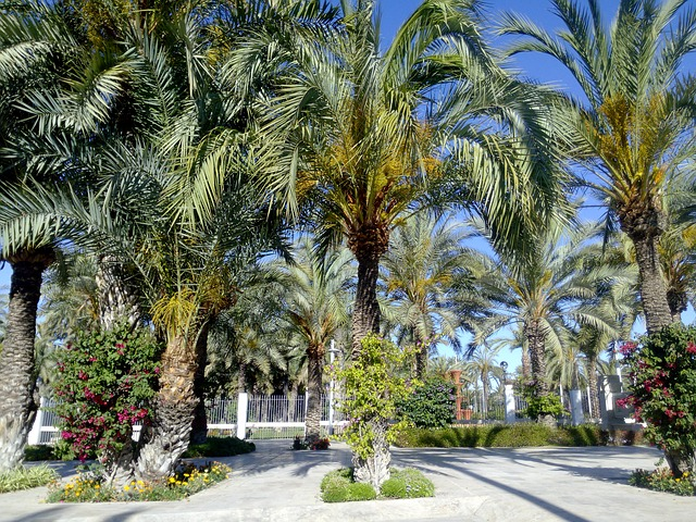 Free elche park nature palms decoration memory green