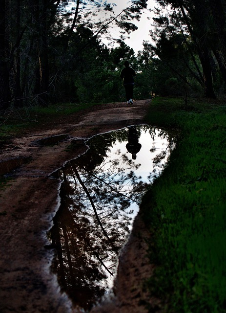 Free corridor ride pinewood water reflection dark