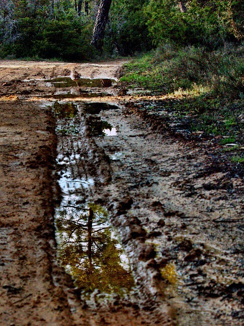 Free reflection road mud nature track forest track