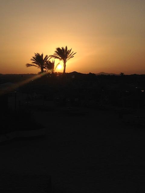 Free sunset palms egypt