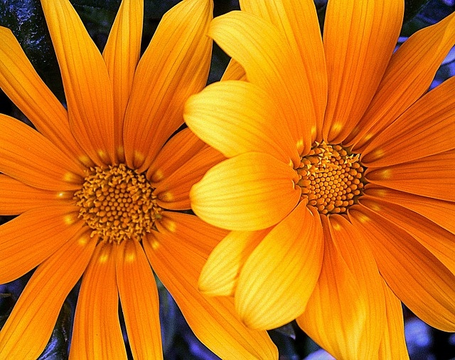Free orange yellow flower