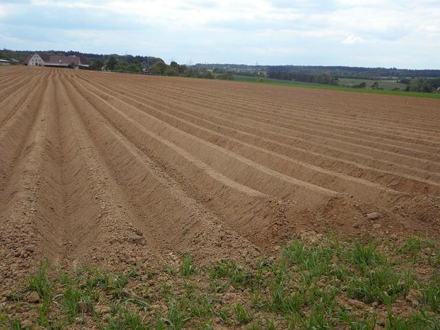 Free ridge arable ackerfurchen earth cultivation