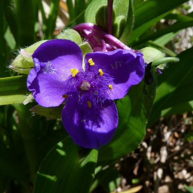 Free flowers nature macro flower violet garden petals