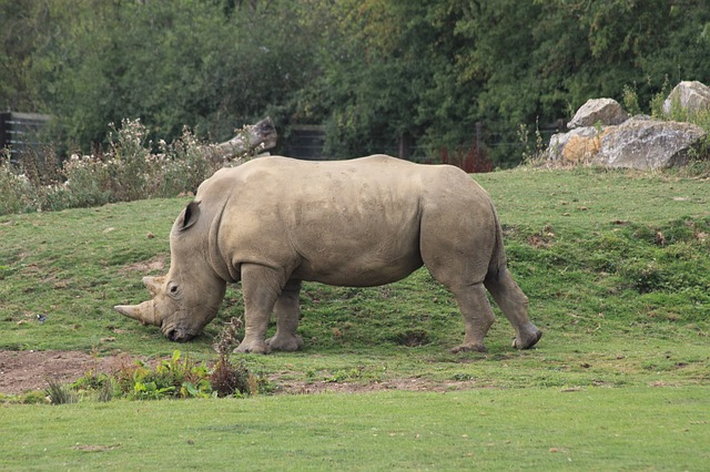 Free rhino animal zoo rhinoceros africa