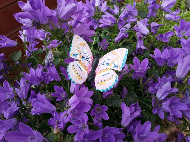 Free butterfly insect public record flowers violet