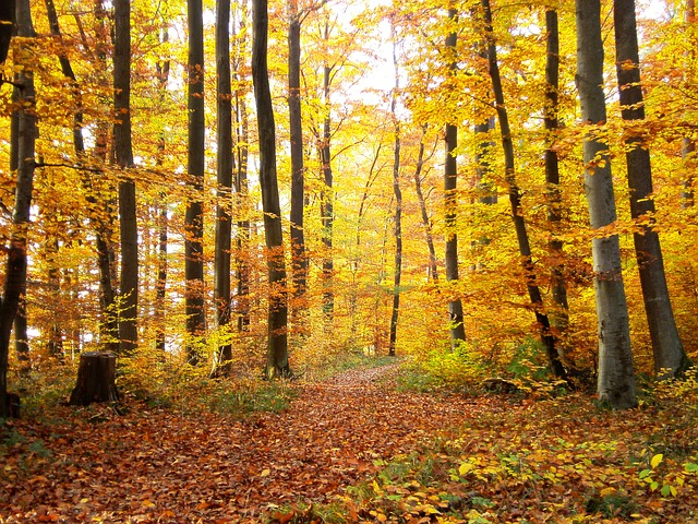 Free forest autumn trees nature away tree